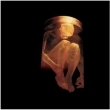Nothing Safe: The Best Of The Box [ENHANCED CD]